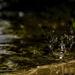 Splish Splash by evalieutionspics