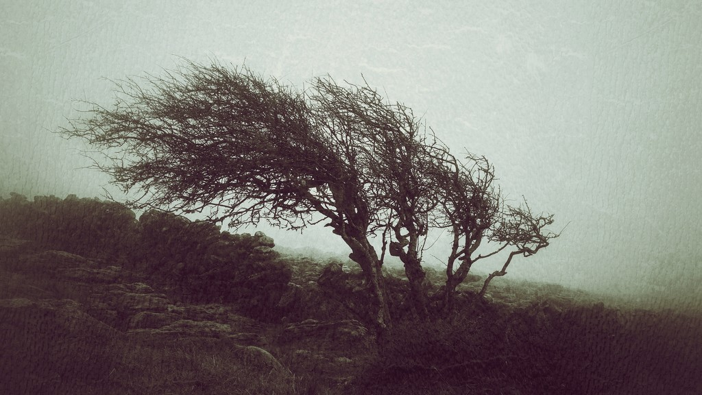 wuthering heights by jack4john