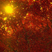 Leaves on Fire by joysfocus