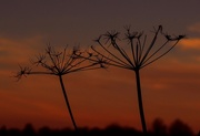 2nd Dec 2016 - weeds at sunset