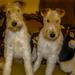 Paddy & Molly