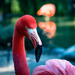 Flamingo Friday - 015 by stray_shooter