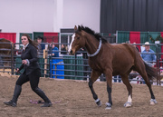 2nd Dec 2016 - Local Equestrian Show