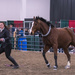 Local Equestrian Show by dridsdale