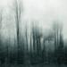 Winter trees by overalvandaan