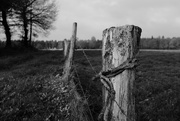 3rd Dec 2016 - OCOLOY Day 338: Occasional Fence Post 12