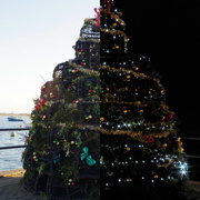 4th Dec 2016 - Lobstar Pot Tree- Day and Night.