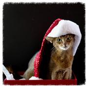 4th Dec 2016 - Hats on...