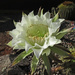 Nice flower by kerenmcsweeney