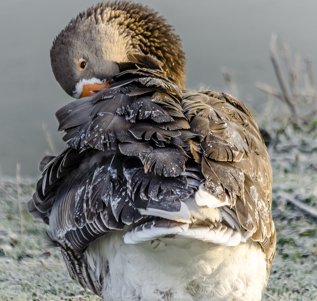 Frosted Goose by tonygig