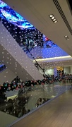 5th Dec 2016 - Amazing display