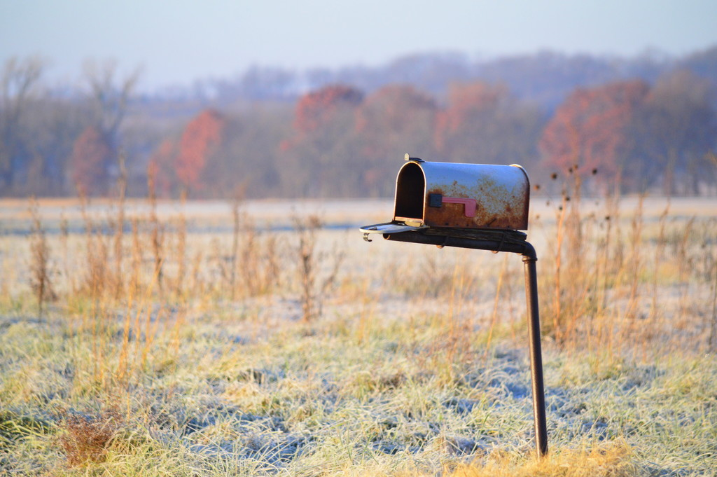 The Liminal Space Between Fall and Winter by kareenking