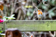 8th Dec 2016 - 2016 12 08 - Checking out his lunch.....