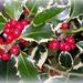 Berries by rosiekind