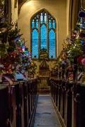 10th Dec 2016 - Christmas Trees