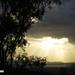 what the koalas wake up to by koalagardens