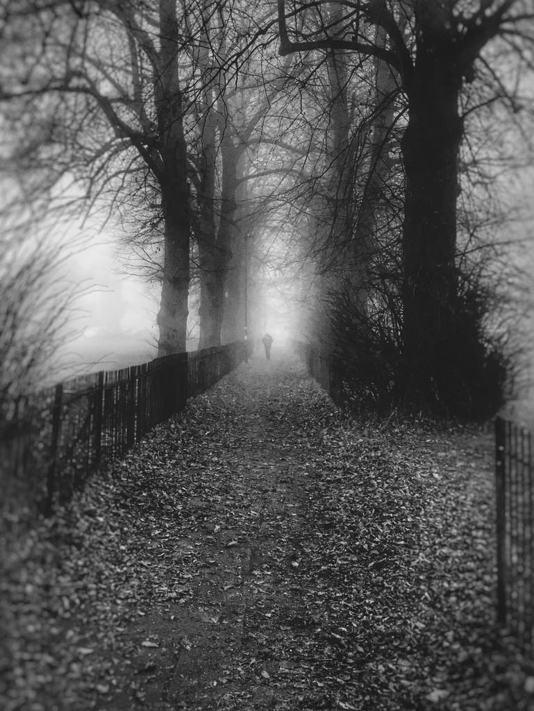 Fog by rachelwithey