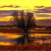 Marshland Tree by joysfocus