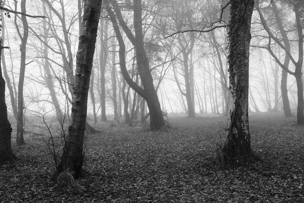 OCOLOY Day 347: Misty Morning by vignouse