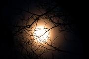 12th Dec 2016 - December Moon