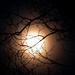 December Moon by dianen