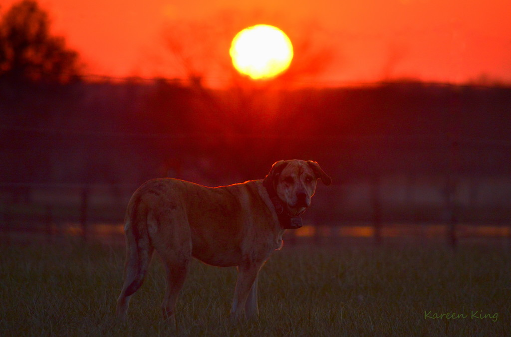 Dog and Kansas Sunset by kareenking