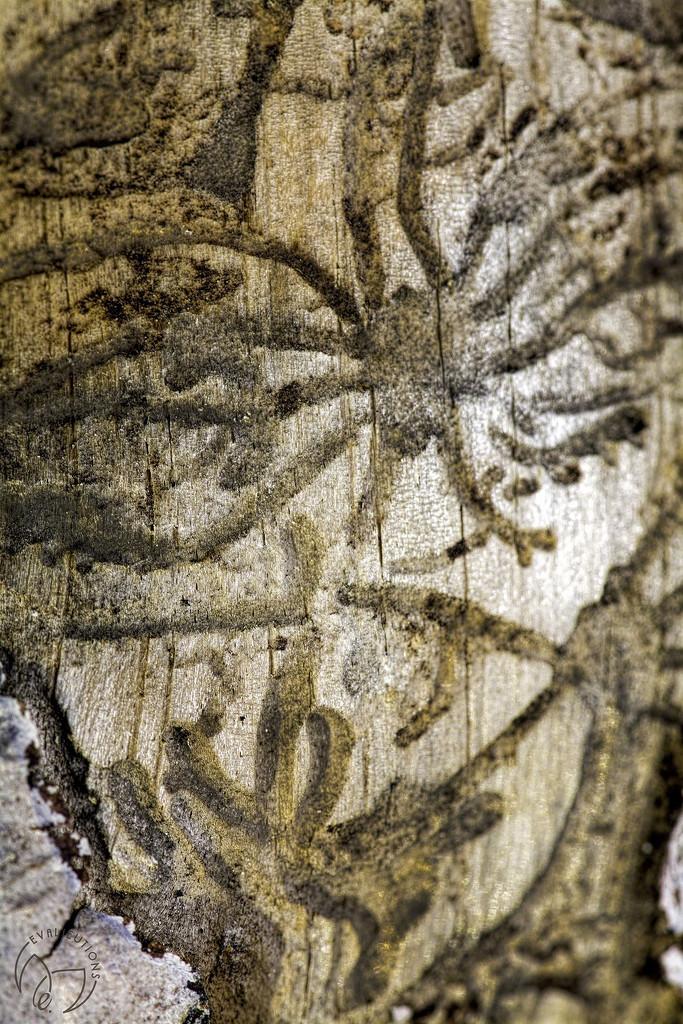 Critter Heiroglyphics by evalieutionspics