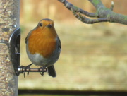 15th Dec 2016 - Where Are The Mealworms?