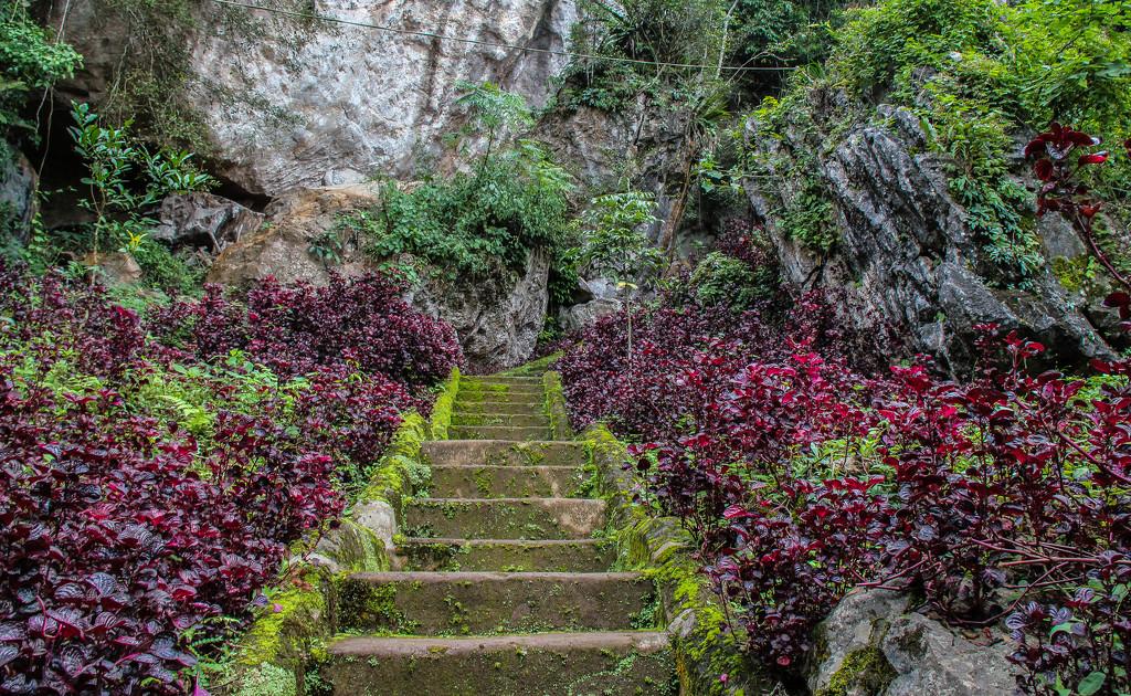 Steps by golftragic