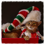 16th Dec 2016 - Hats on...