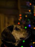 """16th Dec 2016 - """"I have been a good boy!"""""""