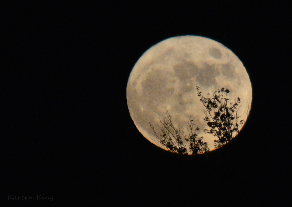 Branches Against Supermoon by kareenking