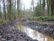 16th Dec 2016 - Taking a wade through Breech Wood