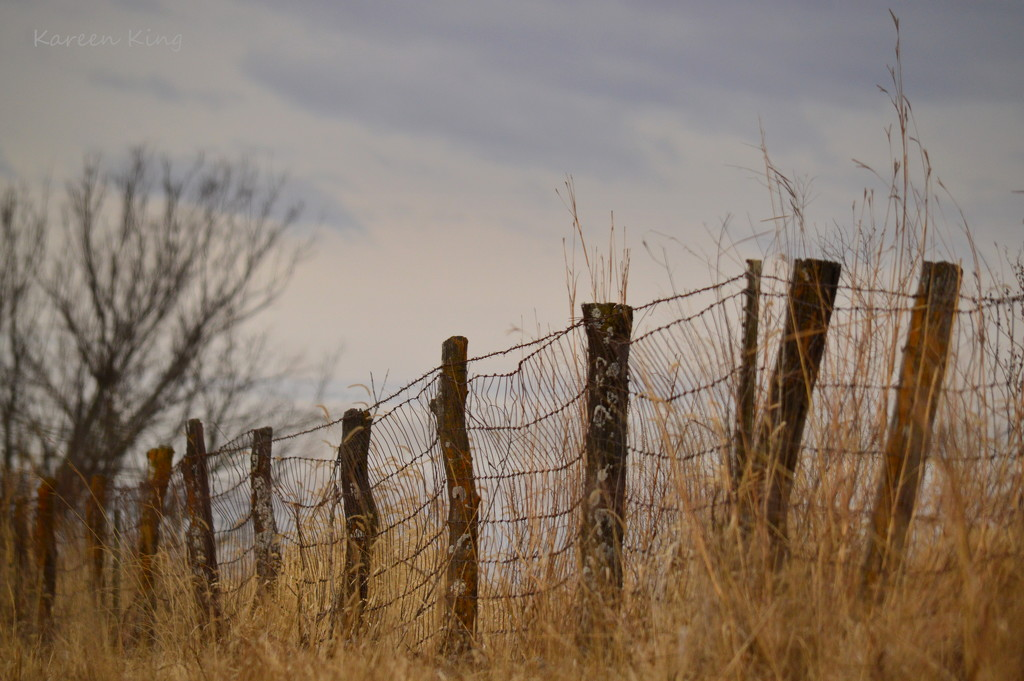 Country Fence by kareenking