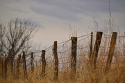 15th Dec 2016 - Country Fence