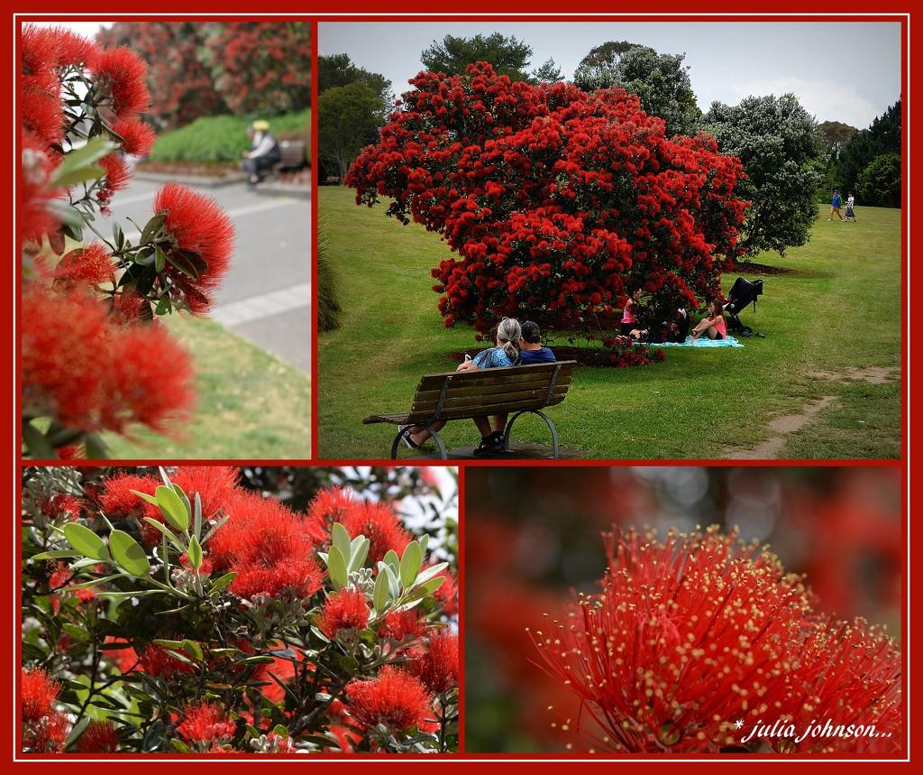 The New Zealand Christmas Tree ...  by julzmaioro