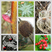 18th Dec 2016 - Nature's Decorations