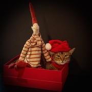 18th Dec 2016 - Hats on...