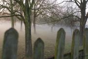 14th Dec 2016 - Fence in fog