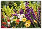 19th Dec 2016 - Summer Blooms..