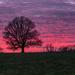 Under a pink sky by rjb71