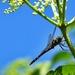Dragonfly by yorkshirekiwi