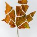 Autumn Leaf Deconstructed by jeetee