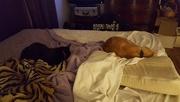 19th Nov 2016 - The cats sleep sometimes too