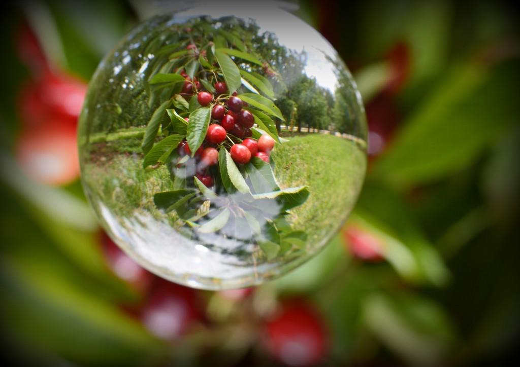A Ball Full Of Cherries_DSC7787 by merrelyn