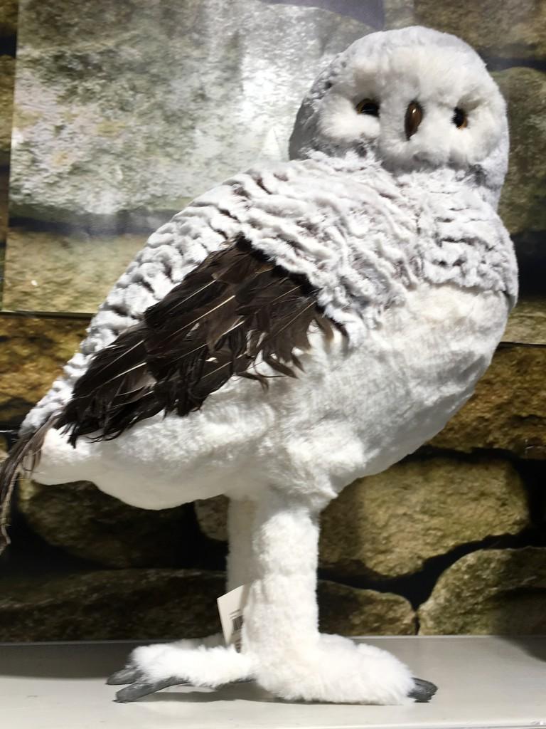 2016 12 21 - snowy owl by pixiemac