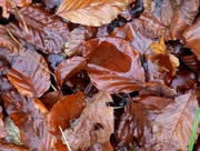 21st Dec 2016 - Rotting leaves