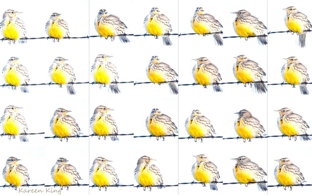 Winter Solstice Meadowlark by kareenking