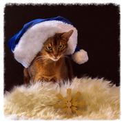 21st Dec 2016 - Hats on...