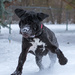 This dog loves the snow!! by dridsdale